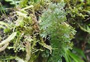Waikato Herbarium